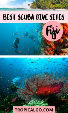 The Ultimate Guide to Scuba Diving in Fiji - Tropical Go! Shark Diving, Reef Shark, Best Scuba Diving, Pelagic Fish, Dive Resort, Marine Reserves, Island Resort, Best Sites, South Pacific