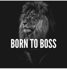Born to Boss! Forget every reason it wont work and focus on the one reason that will. Murray Newlands - Early morning inspiration from the big cats and Its all about building momentum to propel you into You Got It! Lion Quotes, Babe Quotes, Badass Quotes, Attitude Quotes, Woman Quotes, Qoutes, Tiger Quotes, Fierce Quotes, Ambition Quotes