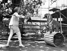 tiger in the menagerie poem ile ilgili görsel sonucu