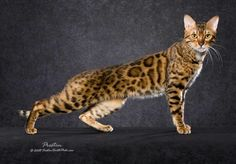 I have this cat one dayyy.