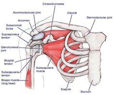 ¿Cuál es el mejor tratamiento para el hombro doloroso?
