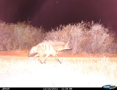 Some pictures from Kagga Kamma's motion sensor camera Game Reserve South Africa, Private Games, Some Pictures, Wilderness, Into The Wild