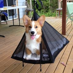 """Regularly $39.00 The Original Pet Pyramid offers your pet a safe and swinging place to literally """"hang out."""" It's like sitting in a tree! This hanging Pyramid moves with your pet. Hangs easily from an"""