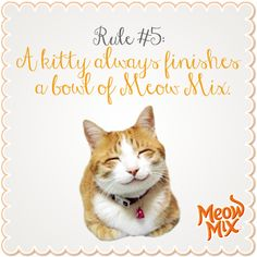 Rule #5: A kitty always finishes a bowl of Meow Mix.
