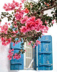 Kalimera #greece #greecetrip #streetphotography #windowpic #flowerlover #wanderlust #wanderluster #travel #travelblogger #travelblog #travelphotography #worldtraveler #beautifulworld #beautifulplaces #beautifuldestinations #makingmemories #packandgo #lifeofadventure