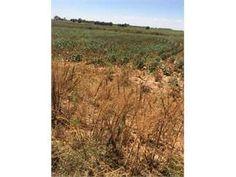 Lubbock, Lubbock County, Texas Land For Sale - 12.81 Acres