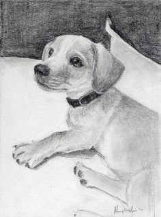 7x5 inch graphite pet portrait/Pet Portrait/ custom portrait/