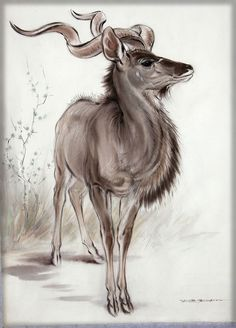 Kudu by Ralph Thompson