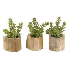 Burro Tails - Set of 3 ($59) ❤ liked on Polyvore featuring home, home decor, floral decor, wooden planters, artificial silk plants, home decorators collection, wood planter and faux plants