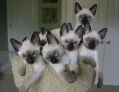 It is so hard not to run out and get kittens!