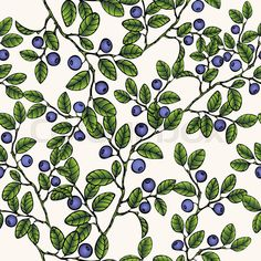 23999141-branches-of-blueberries-seamless-pattern-berry-background-painted-fruit-graphic-art-cartoon-for-the-design-the-fabric-print-wallpaper-wrapping-vector-illustration.jpg (800×800)