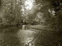Walking through a Washington State park near Belfair. Its remarkable to find places of serenity.