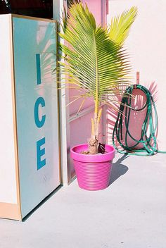 ice ice baby . hot pink palm