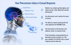 How Pheromones Induce a sexual response.