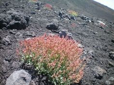 Hiked the craters of Etna - Sicily - Italy