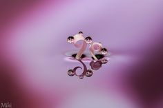 Beauty lasts forever by Miki Asai on 500px