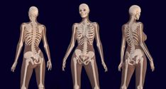 Scientist Reveal What Cannabis Does to Your Bones  #CBDdoesbonesgood #CBD #CBDoil #bones #cannabis #oil #bonehealth #bonestrength #bonegrowth   http://ushealthmagz.com/2018/04/25/scientist-reveal-what-cannabis-does-to-your-bones/  A study was published by The Journal of Bone and Mineral Research, conducted by researchers from Tel Aviv University and Hebrew University. This study showed that a chemical in marijuana, known as …