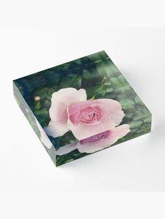 """Rose"" Acrylblock von GlobalDesignIbk | Redbubble Iphone, Stickers, Design, Gifts, Presents, Favors, Gift, Decals"