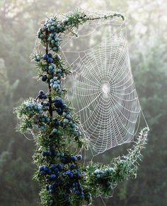 The Perfect Spiderweb