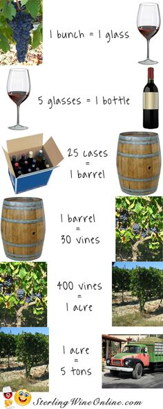 Wine Facts Infographic - I just felt I needed to know these things!