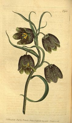 Curtis's botanical magazine..
