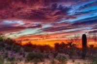 Tucson 6