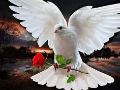 birds of peace .. X ღɱɧღ ||