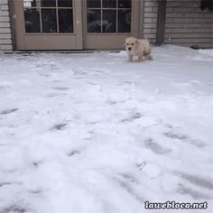 CUTE PUPPY!!!!!!!!!!!! | These Animals Playing In The Snow Will Melt Your Polar Vortexed Heart