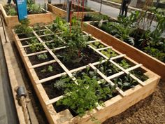 Square foot gardening! Here is a link showing how many plants fit in a square foot. http://www.mysquarefootgarden.net/getting-started/plan/