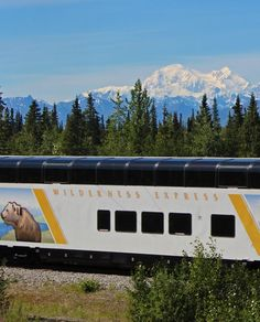 The Wilderness Express operates on the Alaska Railroad's Denali Star route that offers daily summer service to Anchorage, Talkeetna, Denali National Park and Fairbanks. They are usually the last two cars on the train in each direction, following the same schedule as the Denali Star route. Wilderness Express fares typically fall in between the Alaska Railroad's Adventure Class and GoldStar Service making them an exceptional value.