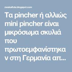 Τα pincher ή αλλιώς mini pincher είναι μικρόσωμα σκυλιά που πρωτοεμφανίστηκαν  στη Γερμανία απ' όπου και κατάγονται.Τα μικρά αφτά σκυλιά ε... Mini