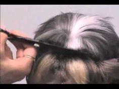 Strzyżenie Shih Tzu. Salon dla Psów LilaArt Koszalin - YouTube
