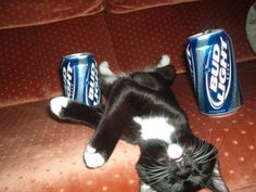 Kitty... #lolsx Thats a lot of beer for a little dude