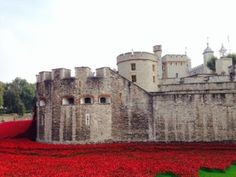 The Tower of London in a bath of poppies...