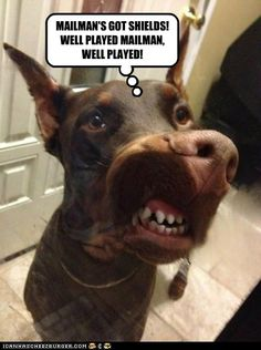 Invisible Mailman Shields! #funnydogs #dogmeme #funny #dogs #doberman