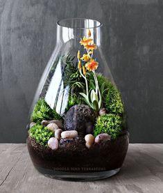 Beautiful Terrarium Ideas What Is A Terrarium? A terrarium is essentially an enclosed environment for growing plants.