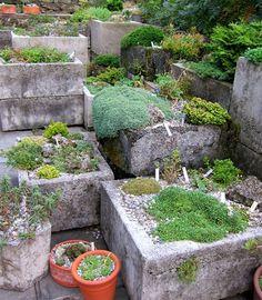 Trough garden with alpines.