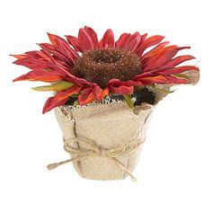 Potted Burlap Sunflower at Big Lots.