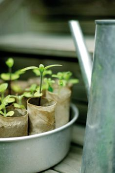 Start plants in toilet paper rolls. The entire thing can be planted in the ground when they are big enough.