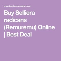 Buy Selliera radicans (Remuremu) Online | Best Deal Ground Cover Plants, Herbaceous Perennials, Plant Companies, White Flowers, Planting Flowers, Plant Finder, Garden Styles, Garden Design, Lawn Accessories