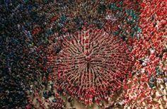 Castellers Colla Vella Xiquets de Valls reach towards the heavens Photograph: Albert Gea/Reuters