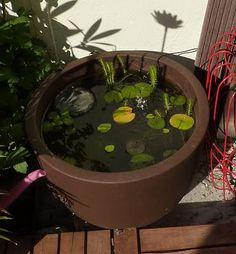 1000 images about bassin sur balcon on pinterest water garden container w - Mini bassin de jardin ...