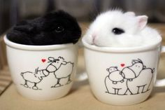 Two tiny rabbits each sitting in their own cups.