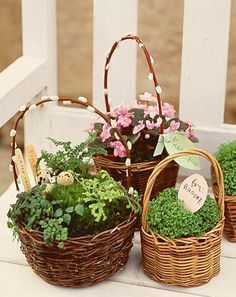 Homemade easter baskets easter easter baskets and homemade plant herbs in a basket cute easter gifthostess gift negle Images