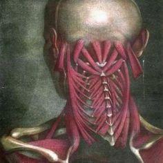 Neck Muscles #MassageTreatment