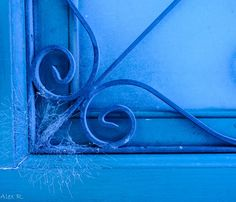 Blue by Didi Redondinha