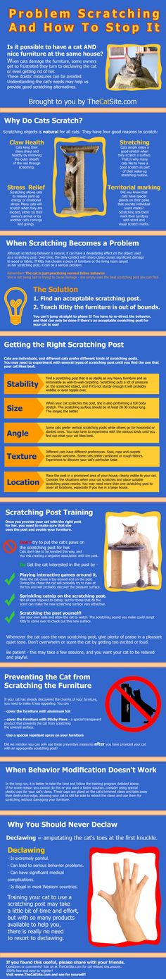 Problem Scratching And How To Stop It - TheCatSite.com Community