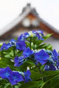 troubadourさんの初夏の「和の風景」1 - 写真共有サービス 「写真部」 byGMO