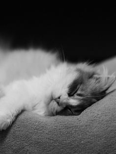 Cute Cat Sleeping Wallpaper for HTC Phones