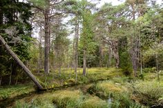 Woods in Saaremaa   digital deconstruction  #Saaremaa #Estonia #travel #woods #nature #spring